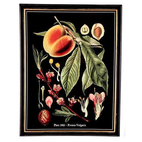 Botanical Framed Print - Large (A)