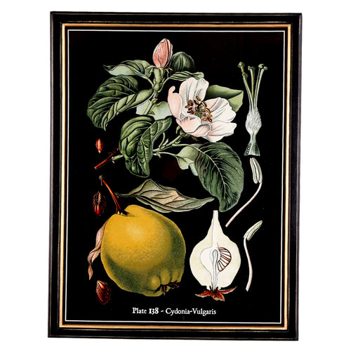 Botanical Framed Print - Large (B)