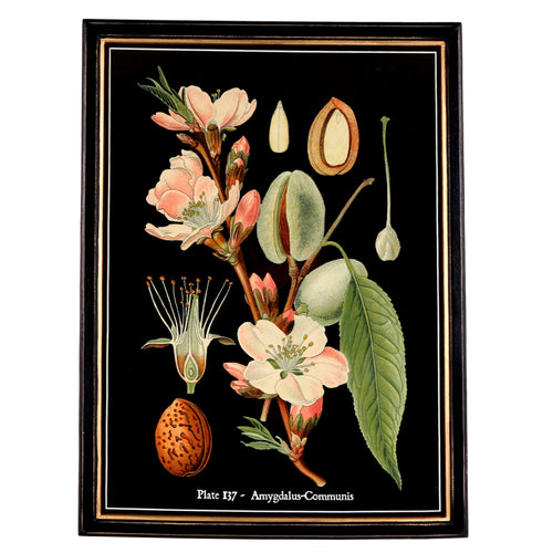 Botanical Framed Print - Large (C)