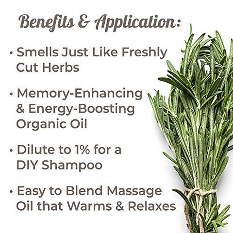 Plant Therapy Rosemary Organic Essential Oil | 100% Pure, USDA Certified Organic, Undiluted, Natural Aromatherapy, Therapeutic Grade | 30 Milliliter (1 Ounce)