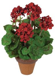Red Geranium Bunch