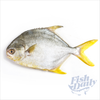 Image of Pomfret | Pompano Fish