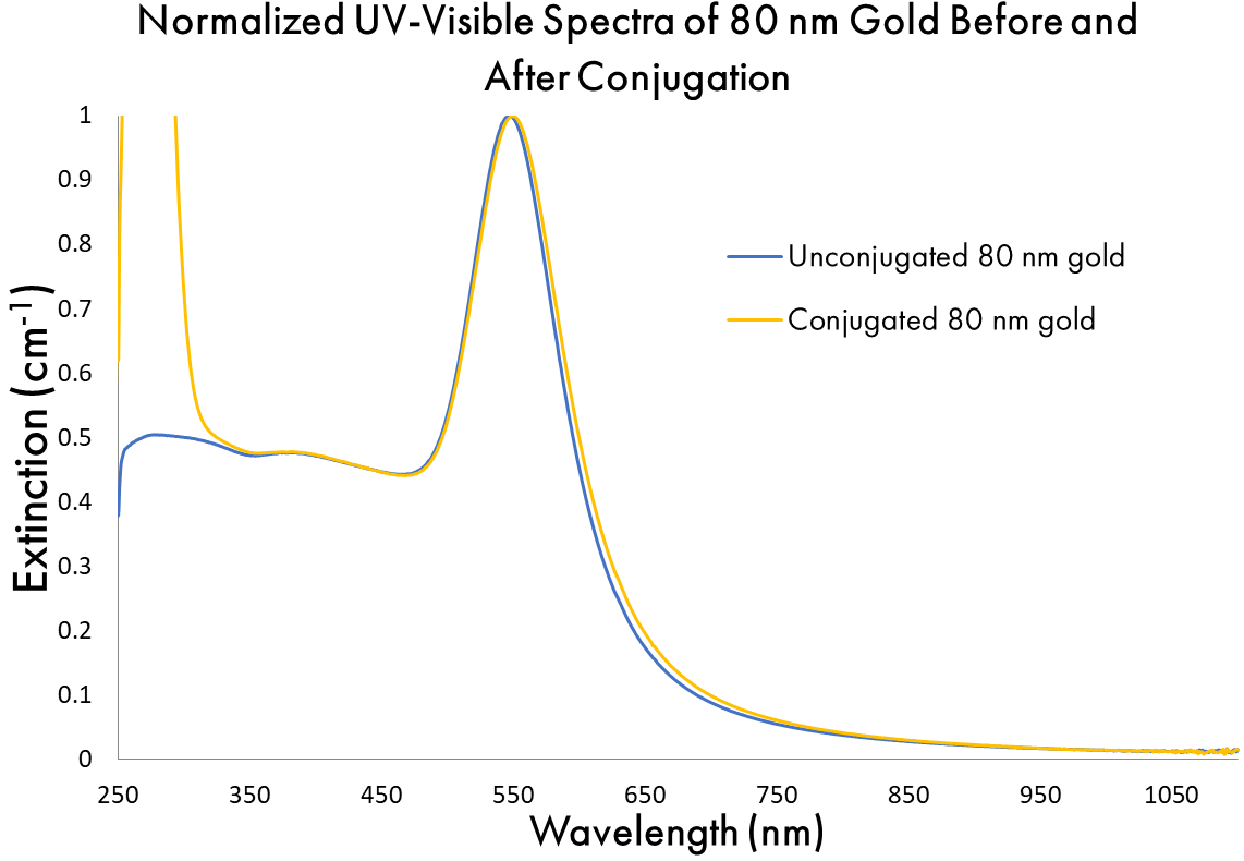 Normalized UV-Visible Spectra of 80 nm Gold Before and After Conjugation