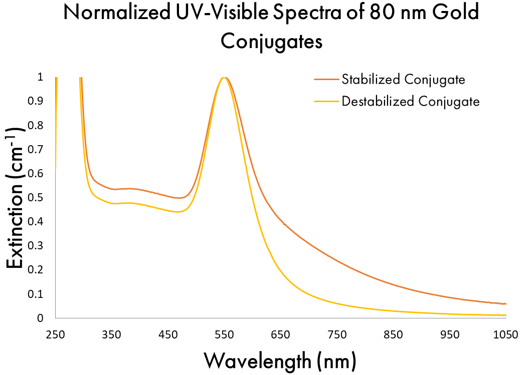 Normalized UV-Visible Spectra of 80 nm Gold Conjugates Stabilized and Destabilized