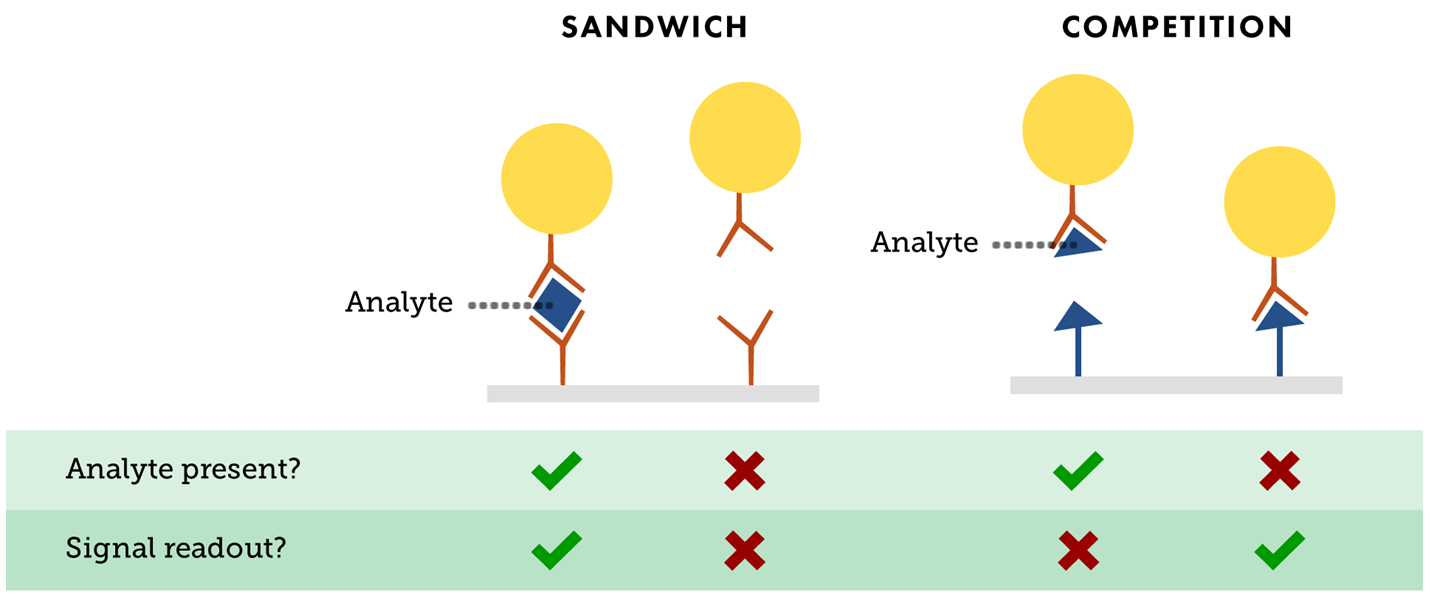 Sandwich Competition Lateral Flow Rapid Test Immunoassay