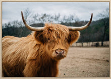 Load image into Gallery viewer, Sammy Scottish Highland Canvas