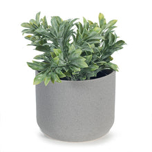 Load image into Gallery viewer, Jade Bush In Pot - Grey/Green