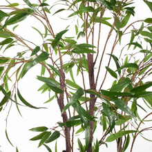 Load image into Gallery viewer, Eucalyptus Tree - 245cm *PRE ORDER*