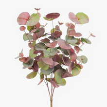 Load image into Gallery viewer, Eucalyptus Silver Dollar Bush