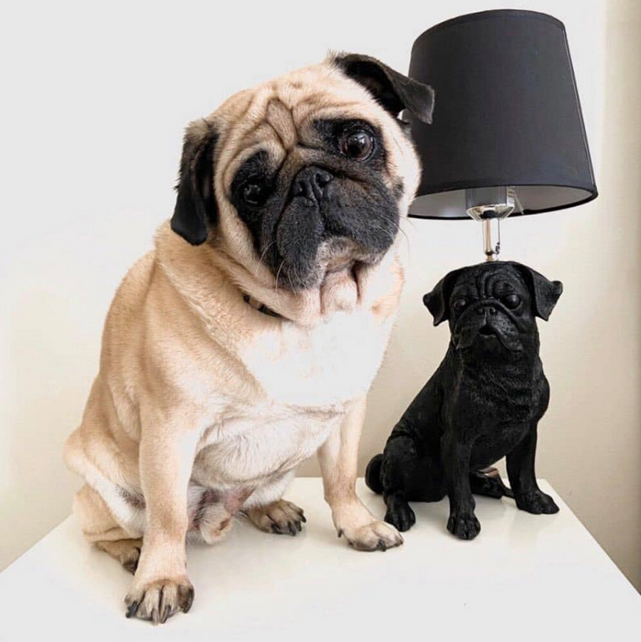 Pug Table Lamp - Black