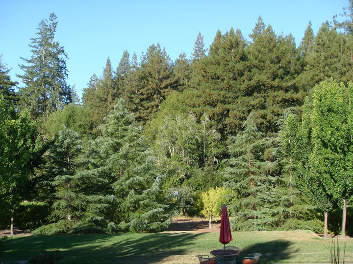 Indian summer in northern california