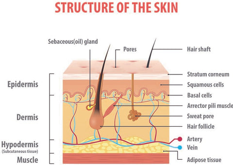 why drinking water does not moisturize skin