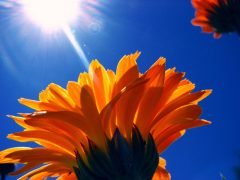 dermatologist's vitamin D tips and sun exposure to your skin