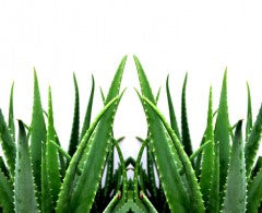best natural sunburn treatment remedies include aloe vera