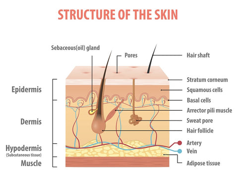 skin sun damage in your 20s 30s and 40s from UVA