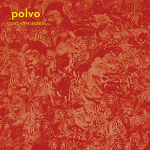 Polvo | Today's Active Lifestyles