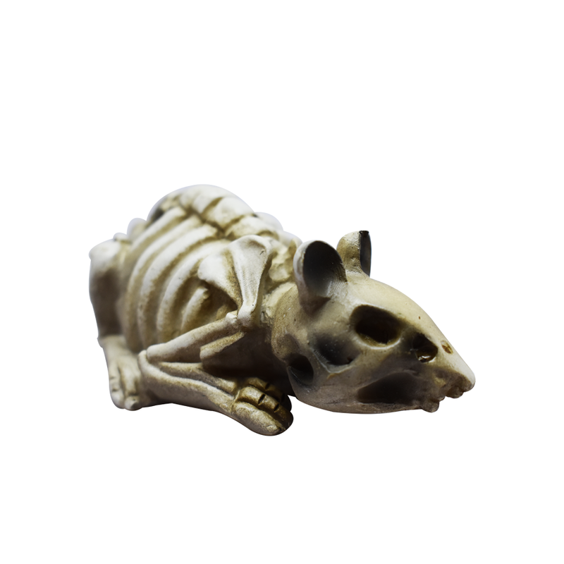 HW20 SKELETON ANIMALS (4751767601201)