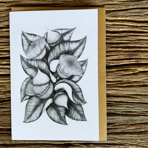 Greeting Card - Eucalyptus Macrocarpa