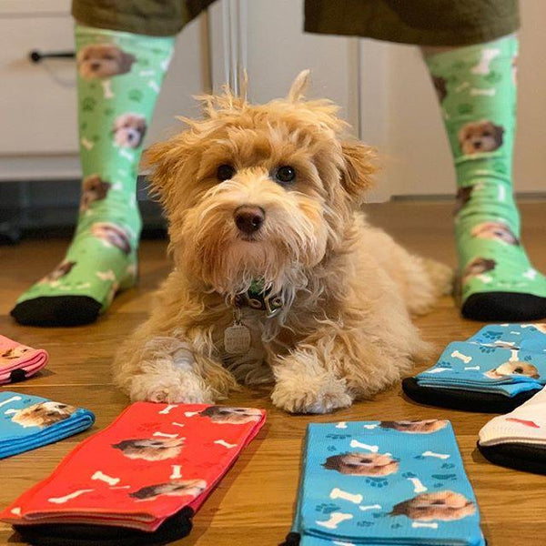 Custom Dog Socks - MyPhotoSocks