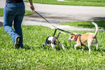 2PET® Double Dog Leash Adjustable Leash Coupler