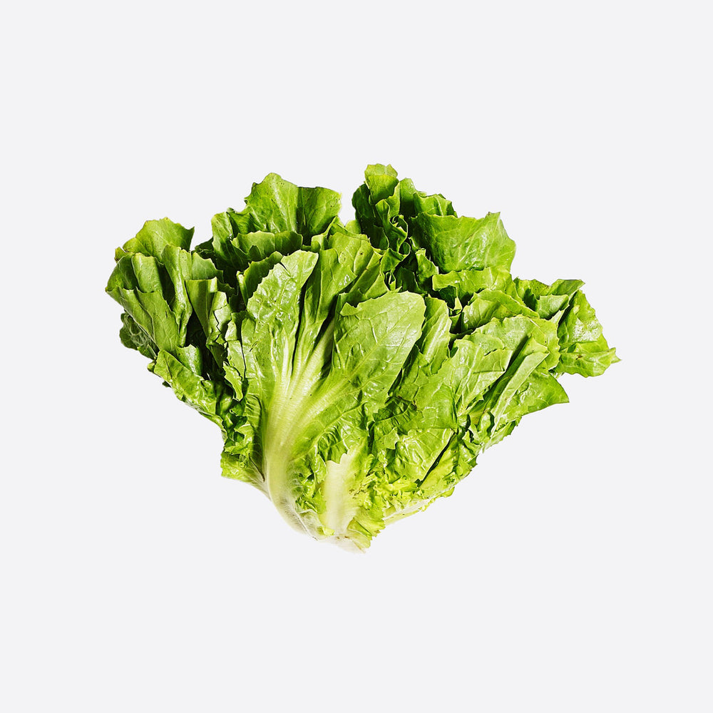 Load image into Gallery viewer, Next-Day Fresh, Escarole - 1 bunch