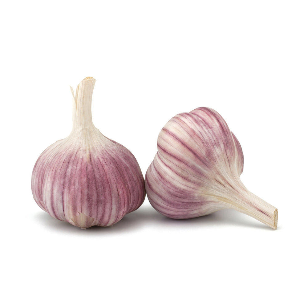 North American Garlic - single