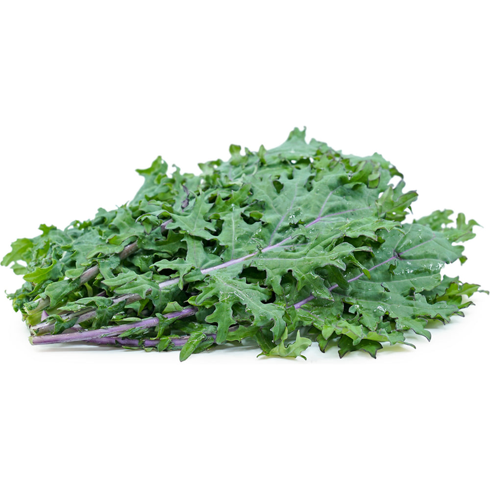 Load image into Gallery viewer, Next-Day Fresh, Red Kale - 1 bunch