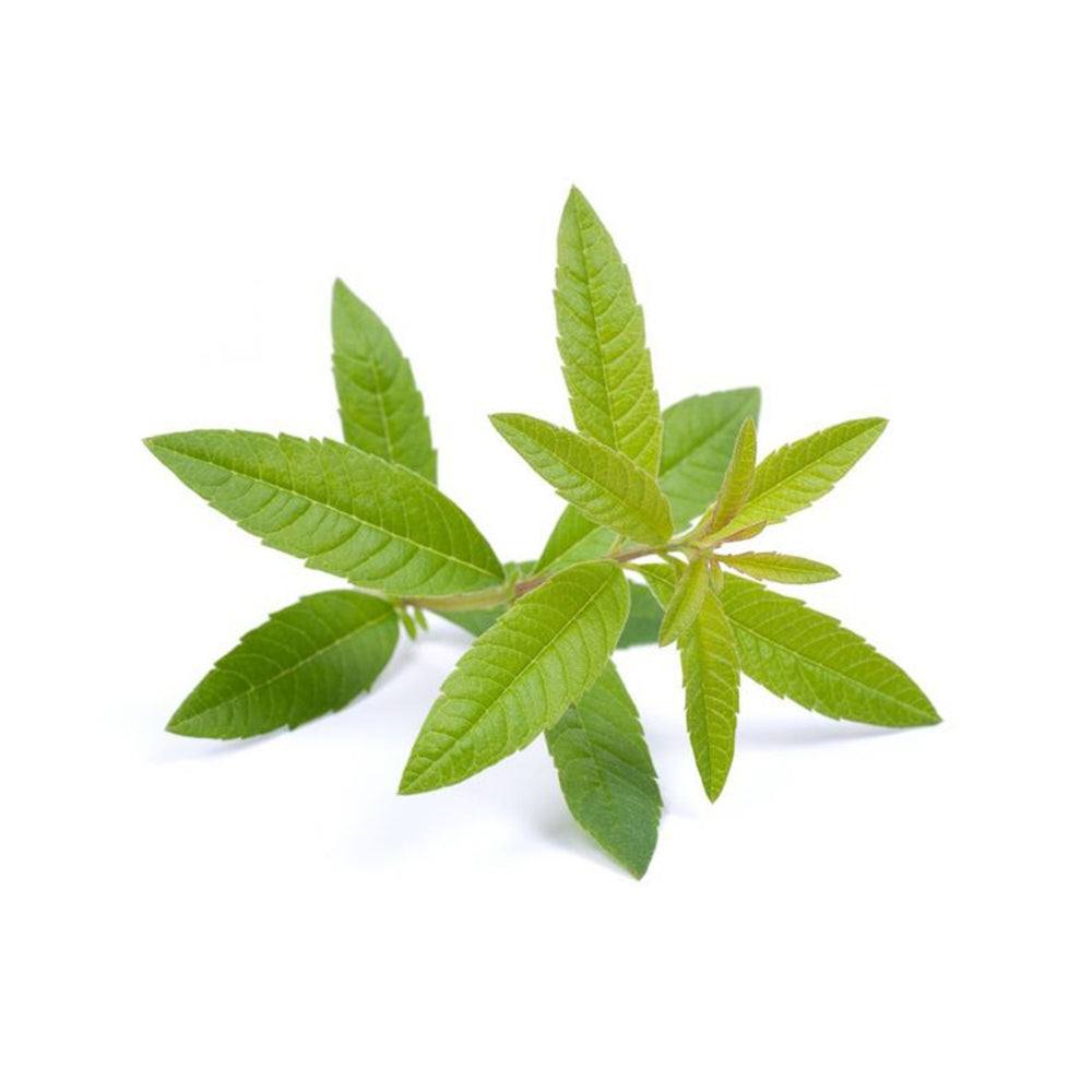 Load image into Gallery viewer, Next-Day Fresh, Lemon Verbena