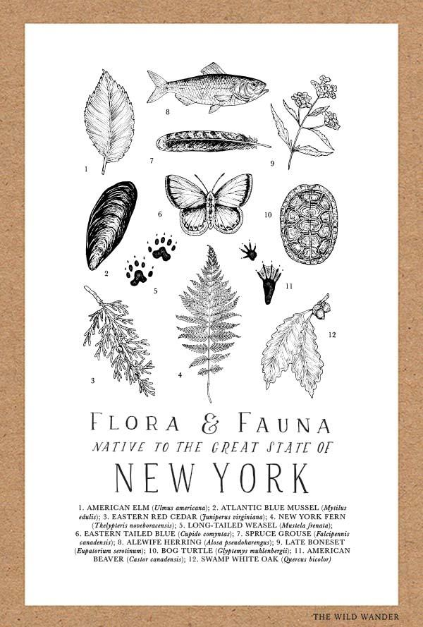 New York Flora Fauna Poster