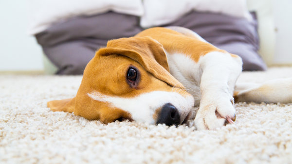 The Dirty Secret You Need to Know about Your Carpet Cleaner