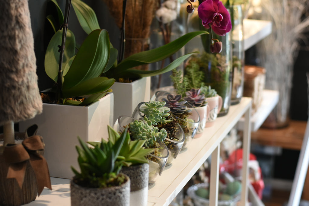 Row of beautifully designed Succulents at Petalino Flower Bar & Events flower shop