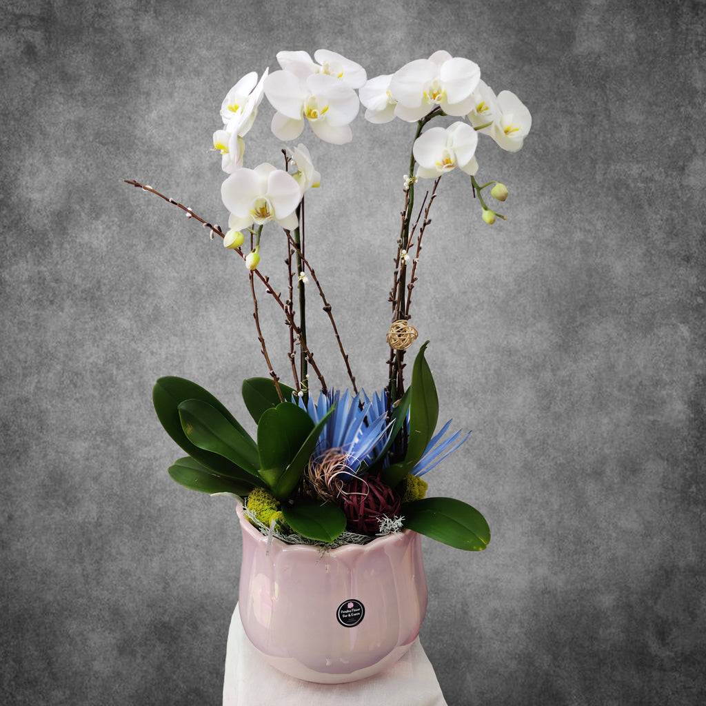 PL-1236 Easter Orchid