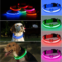 Nylon LED Light Up Dog Collar - Richard Castaneda