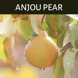 Anjou Pear Scented Products