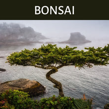 Load image into Gallery viewer, Bonsai Scented Products