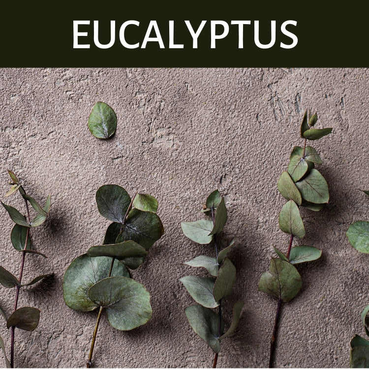 Eucalyptus Scented Products