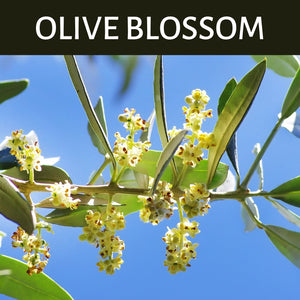 Olive Blossom Scented Products