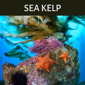Sea Kelp Scented Products