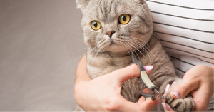 Nail Clipping 101 - Our Top Tips for Keeping Claws in Tip Top Condition