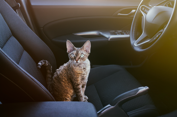 Cats in Cars – Eight Tips for Travelling