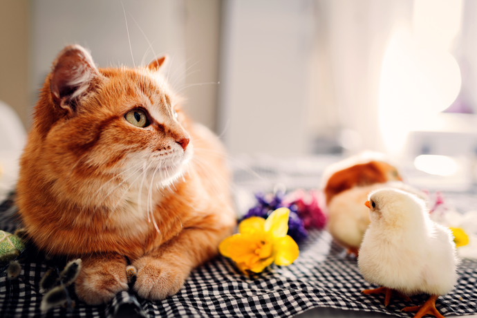Toxic foods for cats - Easter edition