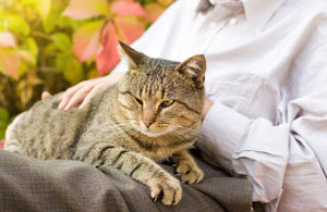 Caring For The Senior Cat