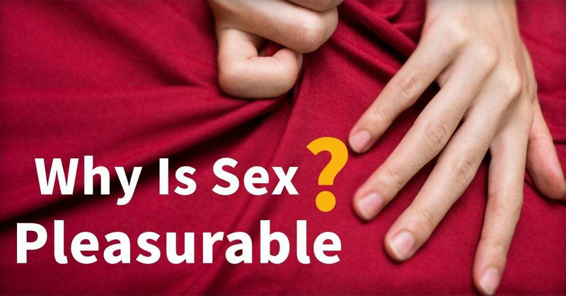Why Is Sex Pleasurable? | RUNYU SM