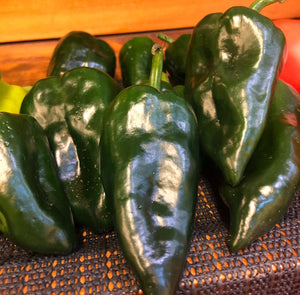 Ancho peppers, homegrown