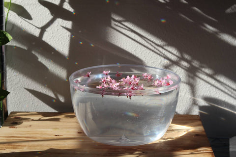 Cherry Blossom Floral Essence Flowers Floating in Water in Bowl