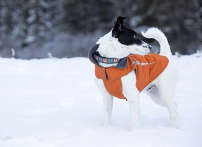 RC Pets Cascade Coat