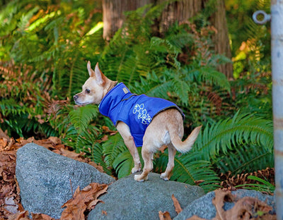 RC Pet Venture Outerwear