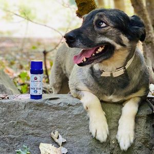 "pawsRprotected  ALL-IN-ONE PAW PROTECTOR ""QUICK STICK"""