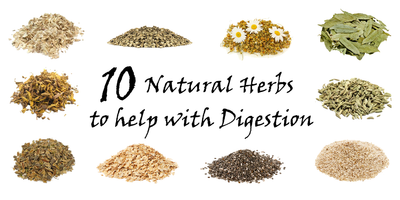 10 Natural Herbs to Help with Digestion