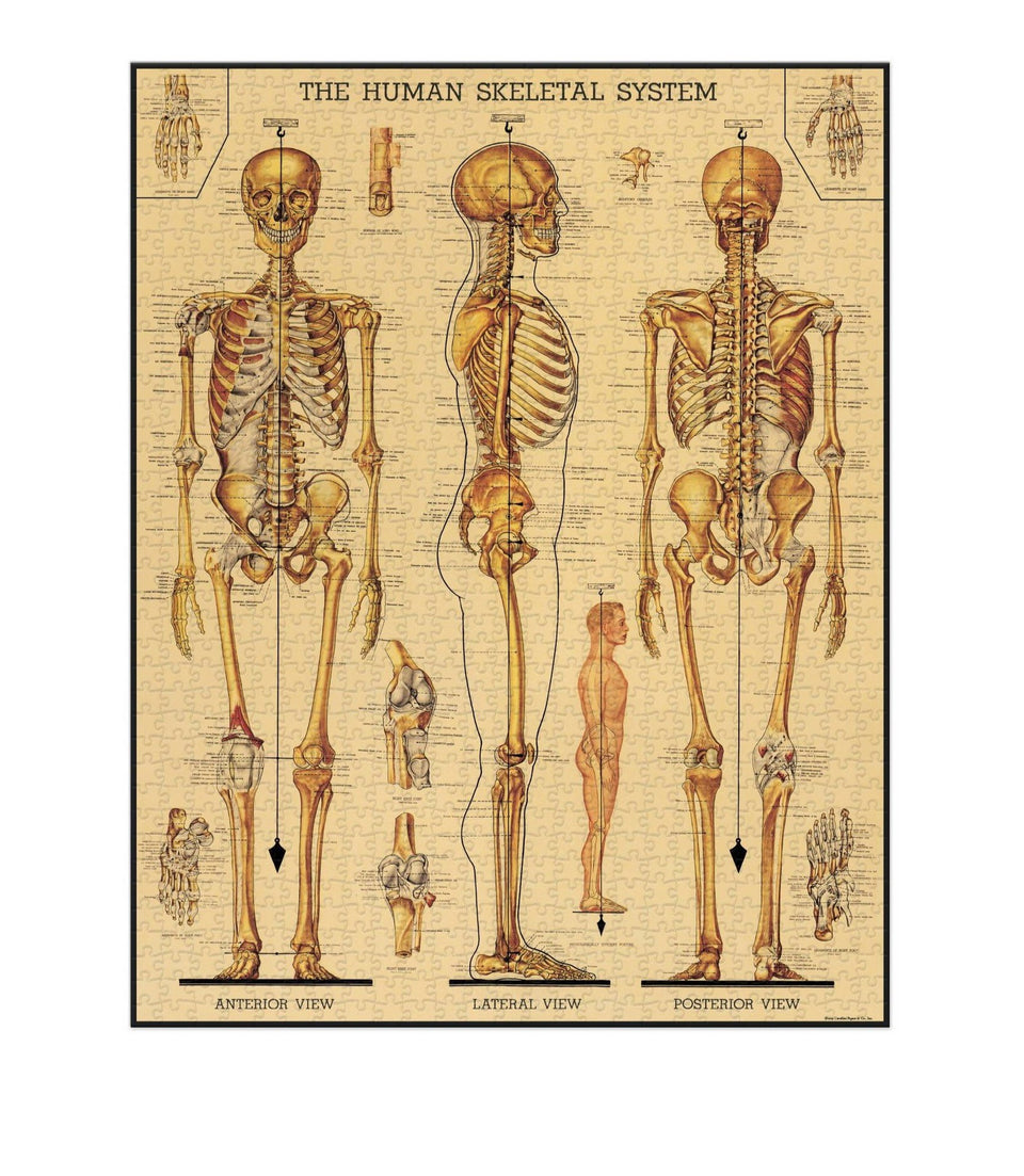 Cavallini & Co. Skeletal System Vintage Puzzle - 1000 pieces